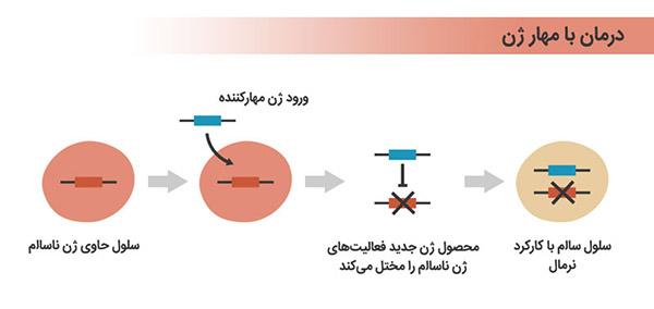 مقاله ژن درمانی انسانی: مروری مختصر بر انقلاب و تکامل ژنتیک
